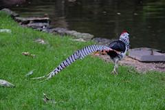 Zoo du Jardin des Plantes (sottolestelle) Tags: jardindesplantes zoodujardindesplantes zoo parczoologique paris ménageriedujardindesplantes