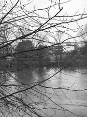river 512a (*a*dalton*) Tags: worcester river riversevern uk trees water blackandwhite bw branches