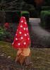 2017_12_0101 (petermit2) Tags: enchantedbrodsworth christmasilluminations brodsworthhall brodsworth doncaster southyorkshire yorkshire englishheritage garden gardens heritage heritagegarden flyagaric mushroom toadstool fungi fungus