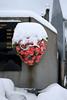 gerbe de neige (Steph Blin) Tags: cimetière roses gerbe tombe tomb cemetery graveyard caveau fleurs flowers neige snow winter hiver auvergne france