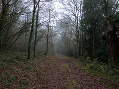 A late foggy Sunday afternoon (Elise de Korte) Tags: fr france frankrijk ldf lafrance arbre arbres bomen boom bos bossen brouillard fog hiver mist tree trees winter