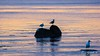 Seagulls at sunrise (E. Aguedo) Tags: seagulls sunrise sea warwick water fall colors reflection rocks new england ngc
