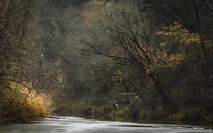 Intertwined (keith_shuley) Tags: trees branches creek stream bullcreek austin texas texashillcountry