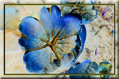 Setas (seguicollar) Tags: imagencreativa photomanipulación art arte artecreativo artedigital virginiaseguí setas hongos azul tratamiento