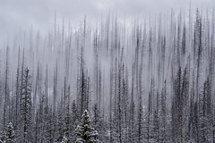 Eerie (Kristin Repsher) Tags: britishcolumbia canada canadianrockies kootenay kootenaynationalpark nikon nikondf numafalls rockies rockymountains telephotolandscape winter