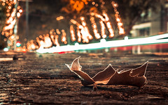 Hojas Navideñas (Cruz-Monsalves) Tags: pedrodevaldivia pedro valdivia hoja leaf night noche luces lights street calle cars coches autos navidad christmas chile santiago stgo scl southamerica america sudamerica floor piso providencia arboles trees