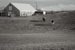 IMG_2031 Edit 3 (Dan Correia) Tags: marthasvineyard island barn fence horse shadows clouds photoshop 15fav topv111 topv333 addme500