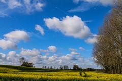 Spring (Just landscapes) Tags: colour color clouds fuji farmland crop skyblue sky cloud farm rapeseed englishcountryside england uk blue fujifilmx100t fujifilm countryside spring yellow landscape