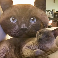―double vision 🐱 🐱 (anokarina) Tags: appleipad losangeles la california ca kalifornia cat kitten kitty stuffed toy