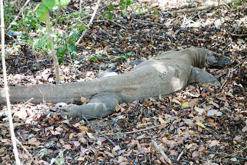95-Labuan Bajo e Islas de Komodo (71)