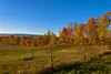 Autumn trees on Shawangunk-Gardiner town line 2016 (Daniel Case) Tags: shawangunk gardiner townline trees autumn bluesky fenceposts field