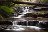 Discovering New Waterfalls || LEURA || BLUE MOUNTAINS (rhyspope) Tags: australia aussie nsw new south wales canon 5d mkii manfrotto waterfall water creek stream blue mountains leura cascades rhys pope rhyspope forest katoomba fern woods tree