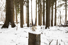 (Pentastar In The Style Of Demons) Tags: canon 5dmk2 ef24105f4 skull animal forest mountain snow winter cold landscape