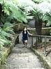 australian national botanic garden-46 (billdoyle[mobile]) Tags: australiannationalbotanicgarden act garden botanicgarden australia australiancapitalterritory anbg canberra australian billdoyle canberratripdec17jan18