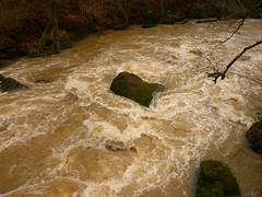 Wilde Prüm (Jörg Paul Kaspari) Tags: irrel irrelerwasserfälle river wild fluss gewässer prüm naturpark südeifel eifel hochwasser wildeprüm