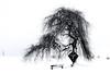 white space (Rafael Zenon Wagner) Tags: snow schnee baum tree winter nikon d810 sigma art 35mm whithe black schwarz weis