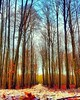 Forest Infinite #benheinephotography #forest #nature #photo #music #melody #foret #photography #path #chemin #trees #arbres (Ben Heine) Tags: benheinephotography photography composition light smartphone nature landscape beauty beautiful photo photographie art ifttt instagram benheine horizon benheineart