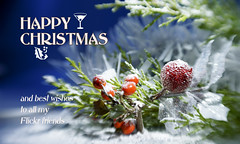 A very merry Christmas ;o) (Elisafox22 slowly catching up ;o)) Tags: elisafox22 sony nex6 lensbaby sweet50 lens composerpro sweet50optic macro 8mmmacroadapter christmas christmascard berries snow branches pine cypress text elisaliddell©2017