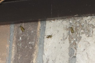 20171209_1317_003_Wasps