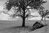auf Abwege geraten (Emanuel D. Photography) Tags: nature landscape tree winter nopeople outdoors snow blackandwhite scenics sky art black canon eos 80d iso100 contrast cold cloudy clouds coldtemperature day district desaturated europe grey light lens mono new outdoor picture place shadow trees views visualart white