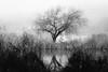 saule pleureur (Samuel Pettina) Tags: arbre etang pond water reflections saule salix