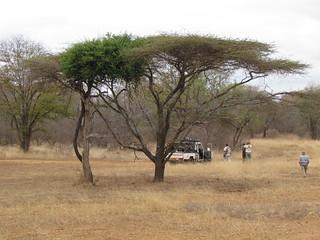 Zimbabwe Cape Buffalo Hunt 29