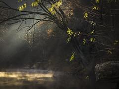 Glint (keith_shuley) Tags: glint twinkle light shine fog foggy filter creek stream bullcreek austin texas texashillcountry