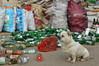 Frightening Chinese Watchdog (Wolfgang Bazer) Tags: kunming yunnan china watchdog wachhund dog hund