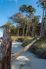 Ostsee  (16) (berndtolksdorf1) Tags: deutschland mecklenburgvorpommern ostsee dars weststrand bäume wald strand outdoor
