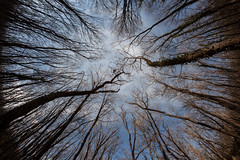 Not As Others (mikhailkorzhalov) Tags: canon samyang samyang8mm 8mm f56 sky nature forest trees minimal minimalism branch fisheye fisheyelens manual manuallenses manualfocus