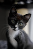 IMG_3730 (danielamesam) Tags: cat cats animal pet animals blackcat blackandwhite black blue greeneyes babycat