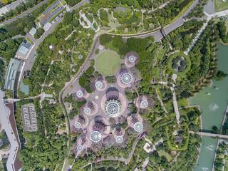 Singapore Tree parc