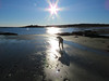 50/52/17 Low tide (Hodgey) Tags: dog josh lab ralph boxerx peter beach silhouettesmaine 52weeksfordogs