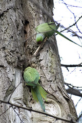 """2moreparrots • <a style=""""font-size:0.8em;"""" href=""""http://www.flickr.com/photos/157241634@N04/39111943721/"""" target=""""_blank"""">View on Flickr</a>"""