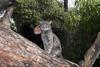 cAthens #21 (juliehrudova) Tags: athens streetphotography cat cats animals flash fuji