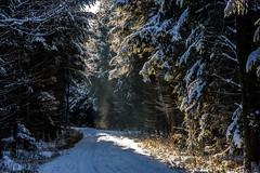 Journey to a Fantasy (*Capture the Moment*) Tags: 2017 backlight backlit bäume dunst forest fotowalk frost gegenlicht landschaften licht schnee snow sonnenstrahlen sonya7m2 sonya7mii sonya7mark2 sonya7ii sonyfe2890macrogoss sonyilce7m2 trees wald wetter winter