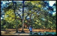 10/26/17 - Angel Oak, Johns Island, SC (CubMelodic23) Tags: october 2017 vacation trip hdr tree liveoaks nature spiritual johnsisland southcarolina angeloak me dave selfportrait