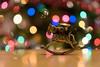 """Good tidings we bring...."" (j van cise photos) Tags: goodtidings wewishyouamerrychristmas bronze horse candleholder rockinghorse bokeh christmaslights decoration happyholidays happynewyear light holiday present joyeuxnoël ¡feliznavidad schöneweihnachten merrychristmas"