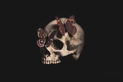 Air-Light Blood of Butterflies (Erlich Lõwi) Tags: vanitas skull butterflies butterfly death dark lowkey stilllife surreal surrealism