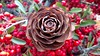 Deodar Cedar Cone Rose (tend2it) Tags: bay area nature trail california usa calif wood wooden red berry deodar cedar cone rose