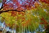 Bamboo grove (Giovanni88Ant) Tags: 松尾寺公園 和泉市 matsuodera park matsuoderapark autumn bamboo osaka