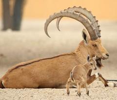 like son, like father! (Amro Afifi) Tags: amroafifi amrophotography amazing boy baby beautiful photooftheday animals portrait wildlife