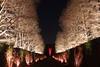 Infinity Beckons (Oleg S .) Tags: garden pennsylvania usa lighting longwood night park alley tree