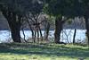 DSC_6182 (rtatn8) Tags: maplelodgenr hertfordshire england uk wildlife bird buzzard buteobuteo flikr