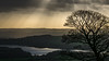 December afternoon (colinb4) Tags: roaches peakdistrict tree rays