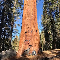 Quality time with giants. (seanflannagan) Tags: forest redwood sequoia sequoianationalpark redwoodforest giantforest meditation outdoormeditation shastana
