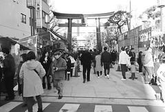 富岡八幡宮 画像45