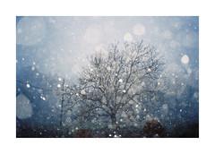 HAPPY NEW YEAR EVERYONE! by Punkroyaltiger - Winter Breath