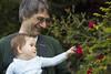 Tabby likes the roses (louisa_catlover) Tags: holiday christmas outdoor garden mtwilson bluemountains ashridge nsw australia canon 60d helios helios442