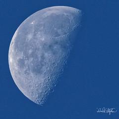 Waning Gibbous Moon (dcstep) Tags: dsc4565dxo sonya9 canonef500mmf4lisii ef14xtciii cherrycreekstatepark colorado usa aurora allrightsreserved copyright2017davidcstephens dxophotolab luna lunar moon gibbous waninggibbousmoon